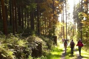 [title] - Wandern zählt im Odenwald zu den beliebtesten Akitiviäten. Große und kleine Wanderrouten, Nordic-Walking-Touren, Lehrpfade, Rund-Wanderwege und Themen-Wege bieten abwechslungsreiche Möglichkeiten. Neben wandern locken aber noch viele weitere Attraktionen. Mountainbike-Strecken, Klettermöglichkeiten, Sommerrodelbahn, Tierparks, Therme oder Museen sind nur einige Möglichkeiten.