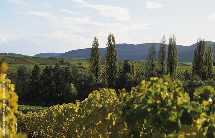 Wandern in der Pfalz an der südlichen Weinstrasse