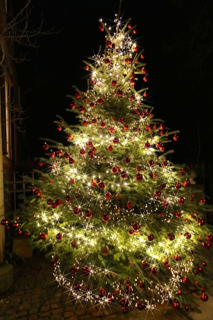 Weihnachtsbaum_GPP