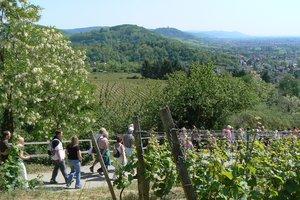 Bergstrasse: Weinlagenwanderung