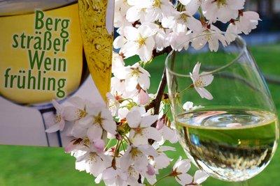 """[title] - eim """"Bergsträßer Weintreff"""" wird die Generation Zwanzig-Elf vorgestellt: Junge Weine mit einem außergewöhnlichen Potenzial, die die Winzer selbstbewusst zur Erstlingsprobe beim Weintreff ins südhessische Bensheim mitbringen."""