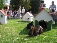 Der Osterhase mümmelt in Weinheim
