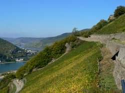 Rheinsteig zwischen Assmannshausen und Lorch