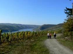 Auf dem Rheinsteig von Assmannshausen nach Lorch